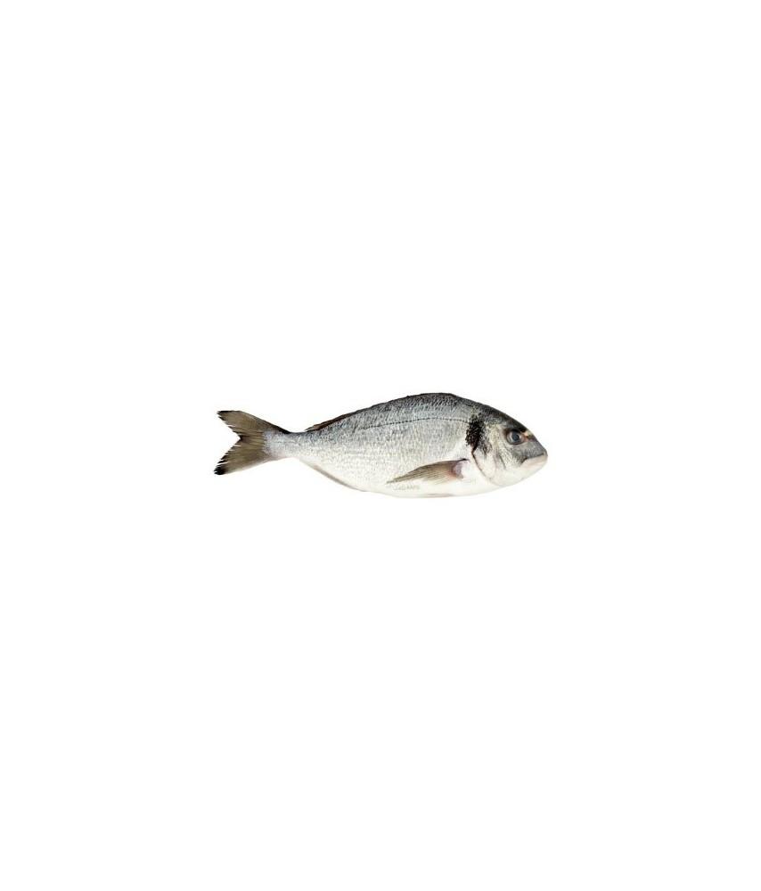 Seabream fresh whole small