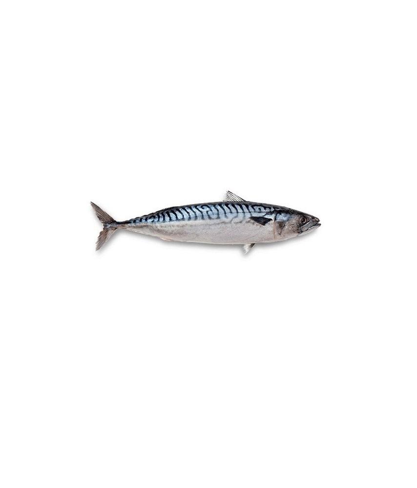 mackerel 2kg pack